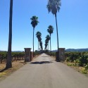 cleaning sisal carpet - Round Pond Estate Winery in Rutherford - Napa Valley CA
