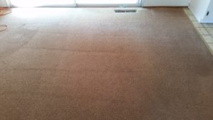 After Carpet Cleaning with our low moisture Teri-Towel System