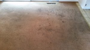 Before Carpet Cleaning (Click to enlarge)