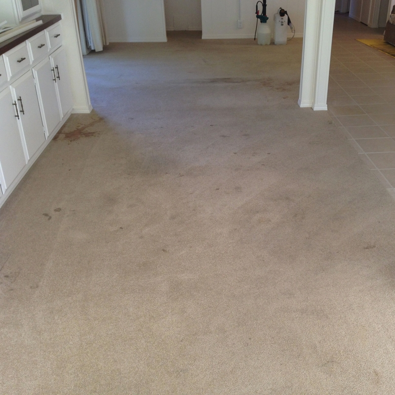 carpet stained 1